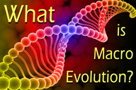 What-Is-Macro-Evolution-tile-1