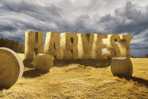 Harvest-Tile