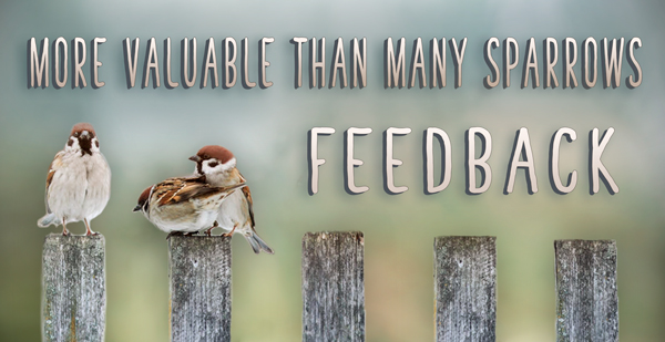 News-Sparrows-FEEDBACK--Banner-6