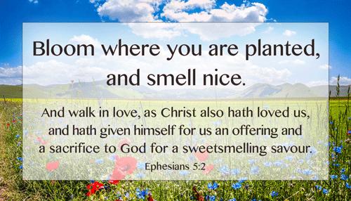 Smell-nice